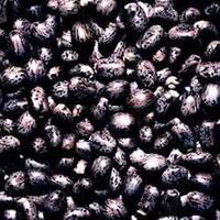 Black Castor Seeds