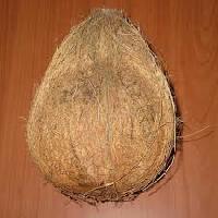 Semi Husked Coconut Coconut, Husked Coconut