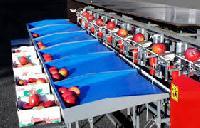 Fruit Sorting Machine