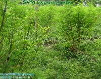 High Quality Moringa Leaves