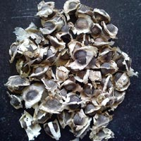 Murungai Seed