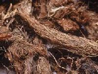 Jatamansi Root