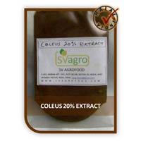 Natural Coleus Forskohlii Extract
