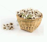 Moringa Hybrid Seeds