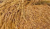Rice Seeds