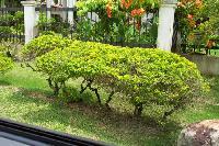 Garden Border Plant