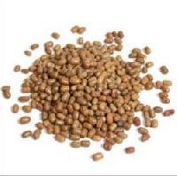 Dew Beans, Haricot, Papillon