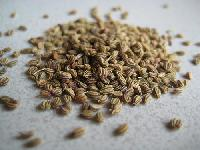 Bishop Seed