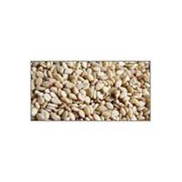 Sesame Seeds (sesamum Indicum)