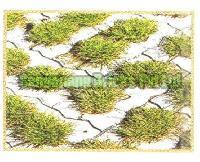 Grass Pavers