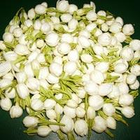 Fresh Flower, Jasmine Flower