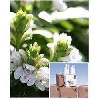 Adhatoda Vasica Leaf Extract