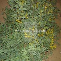 Senna Leaf Extract 40%