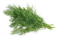 Herb Leave
