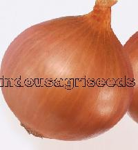 Onion Hybrid Seeds