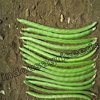 Indo Us Indu Cowpea F1 Hybrid Seeds