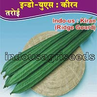 Indo Us Kiran Op ridge gourd F1 hybrid seeds