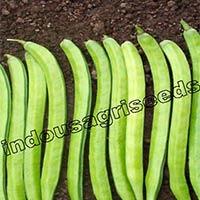 Indo Us Kohinoor Cluster Bean F1 Hybrid Seeds