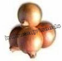 F1 Onion Hybrid Seeds