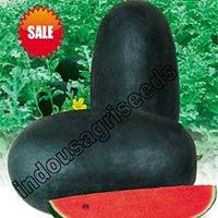 Indo Us Ras Baby Watermelon F1 Hybrid Seeds