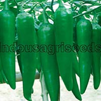 Indo Us Reng Jiao F1 Hybrid Pepper Seeds