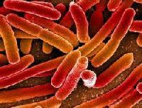 Pathogen Testing Services