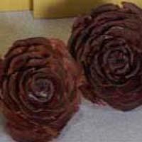 Cedar Roses