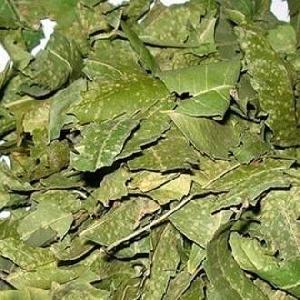 Azadirachta Indica (kadwa Neem Patta)