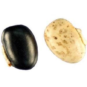 Mucuna Pruriens (kaunch Beej)