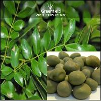 Gataran Medicinal Seeds ( Caesalpinia Bonducella )