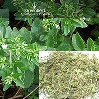 Stevia Medicinal Seeds ( Stevia Rebaudiana )