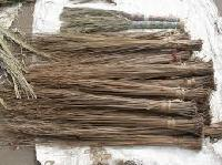Hard Broom Grass