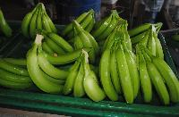 Cavendish Green Banana