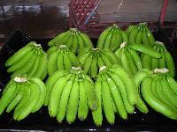 India Cavendish Banana