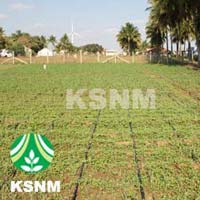 Drip Irrigation System for Agriculture