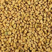 Fenugreek Seed ( Methi )
