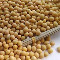 Soya Beans Seeds