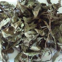 Basil Leaves