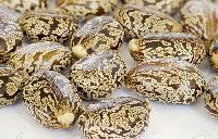 Castor Oil Seed