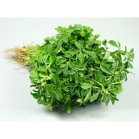 Fenugreek Leafs