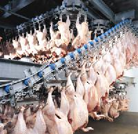 Poultry Processing Plant