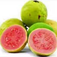Guava fruit lalit