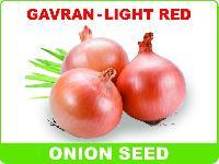 Gavran Light Red Onion Seeds