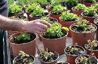 Stevia Plantation All Over India
