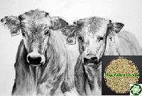 Guar Korma Cattle Feed