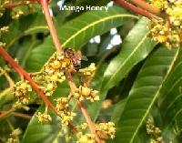 Natural Honey From Mango Flowers