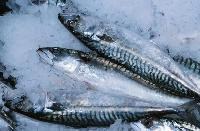 Chilled Fish