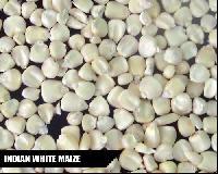 Animal Feed Maize