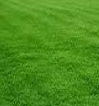 Natural Lawn Grass