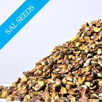 Sal Seeds